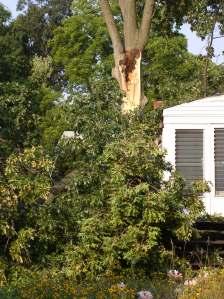 tree-split2