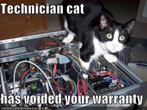 Teknishun Cat