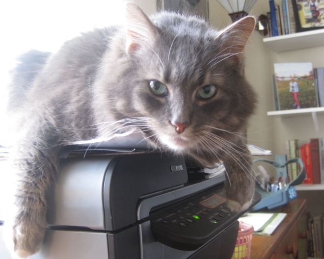 Printer kitty