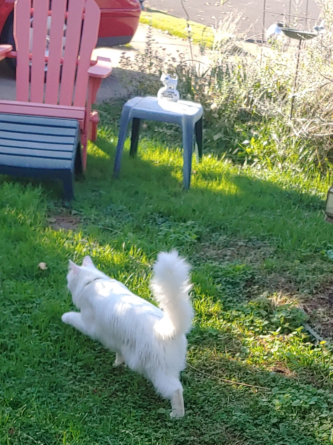 white-guest-cat